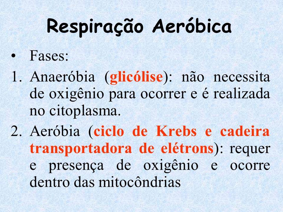 Respiração Aeróbica Fases: