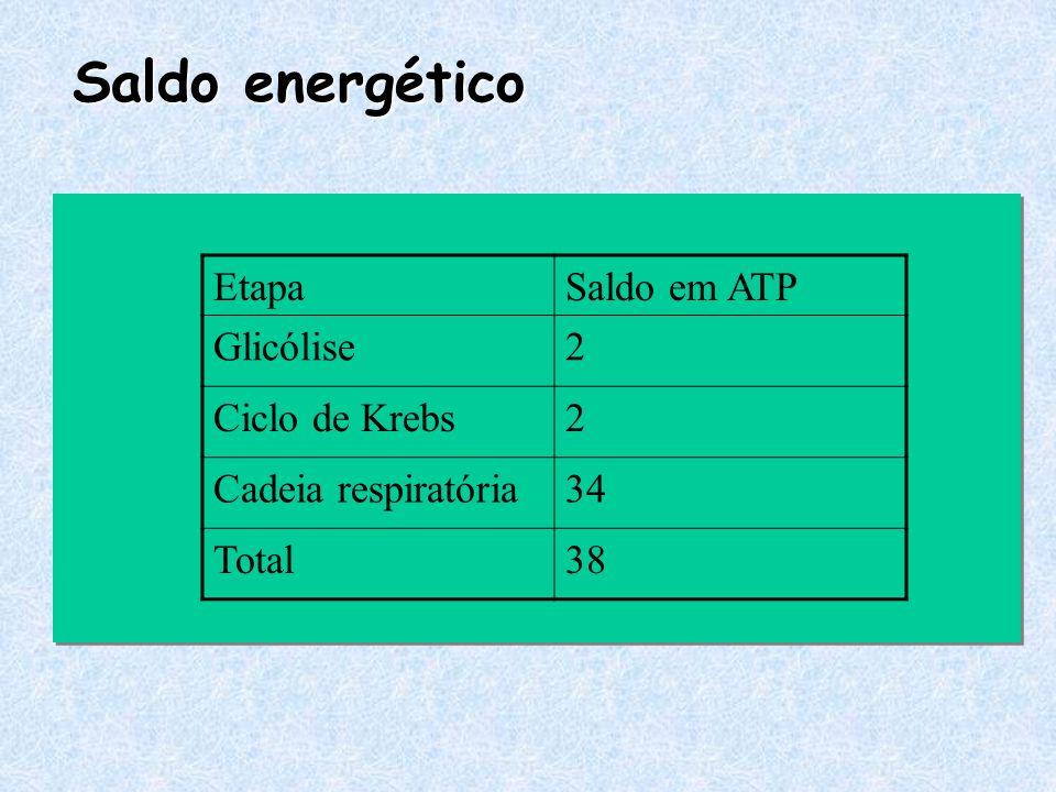 Saldo energético Etapa Saldo em ATP Glicólise 2 Ciclo de Krebs