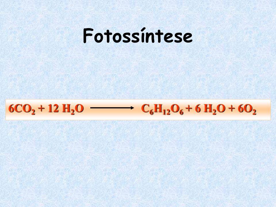 Fotossíntese 6CO2 + 12 H2O C6H12O6 + 6 H2O + 6O2