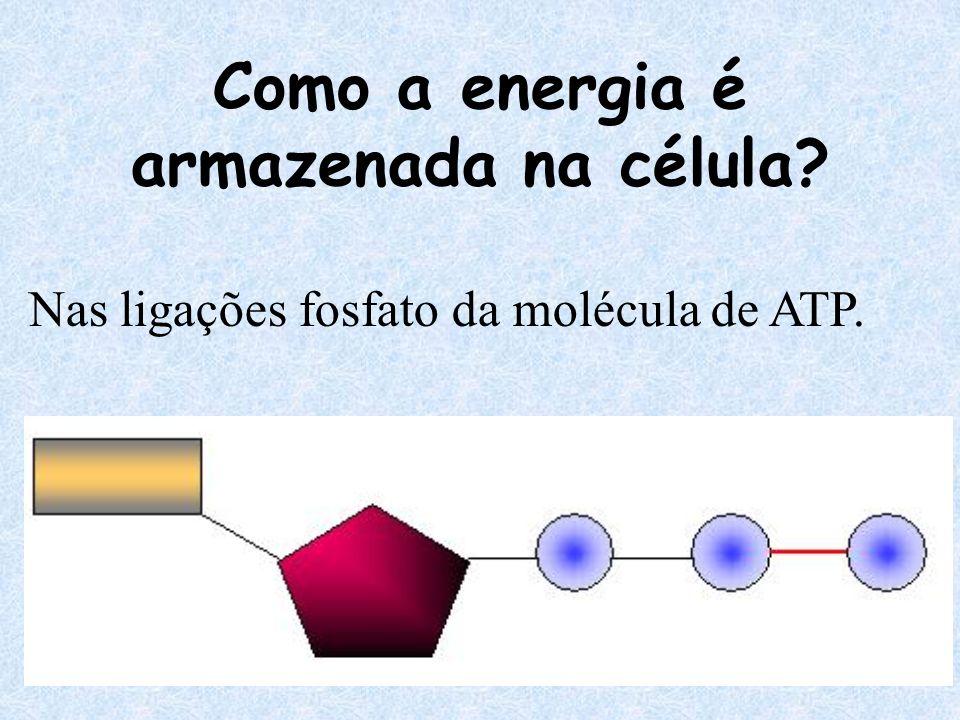 Como a energia é armazenada na célula