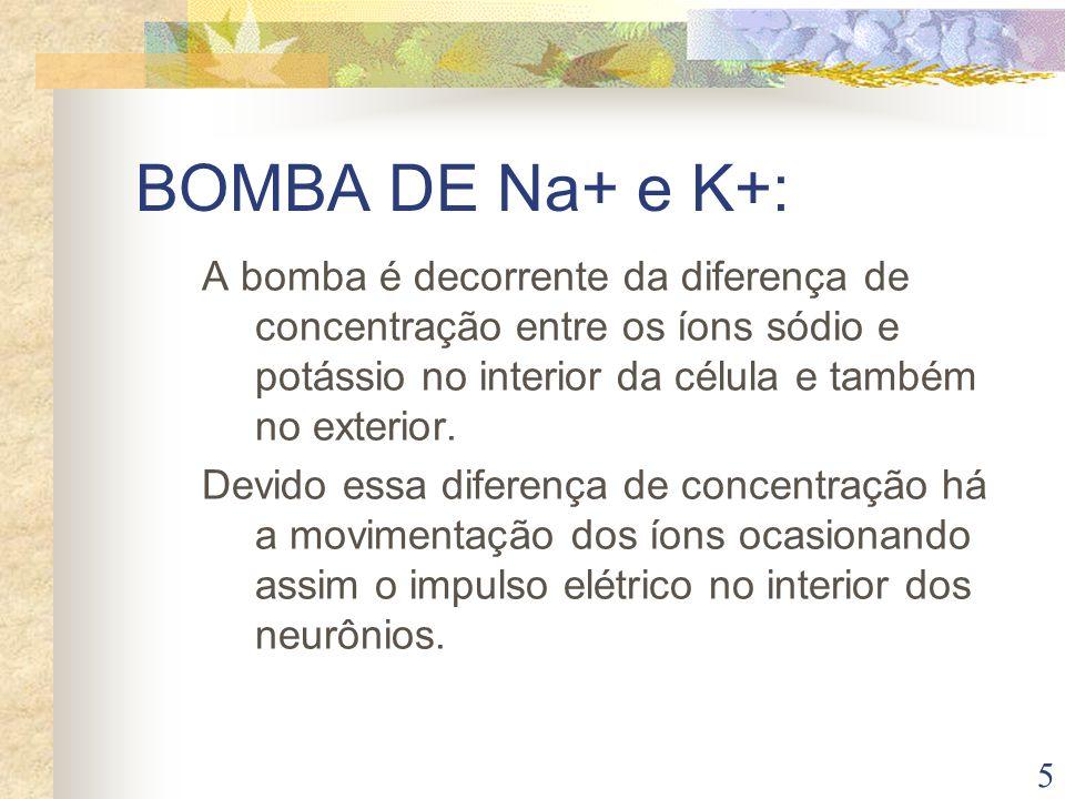 BOMBA DE Na+ e K+: A bomba é decorrente da diferença de concentração entre os íons sódio e potássio no interior da célula e também no exterior.