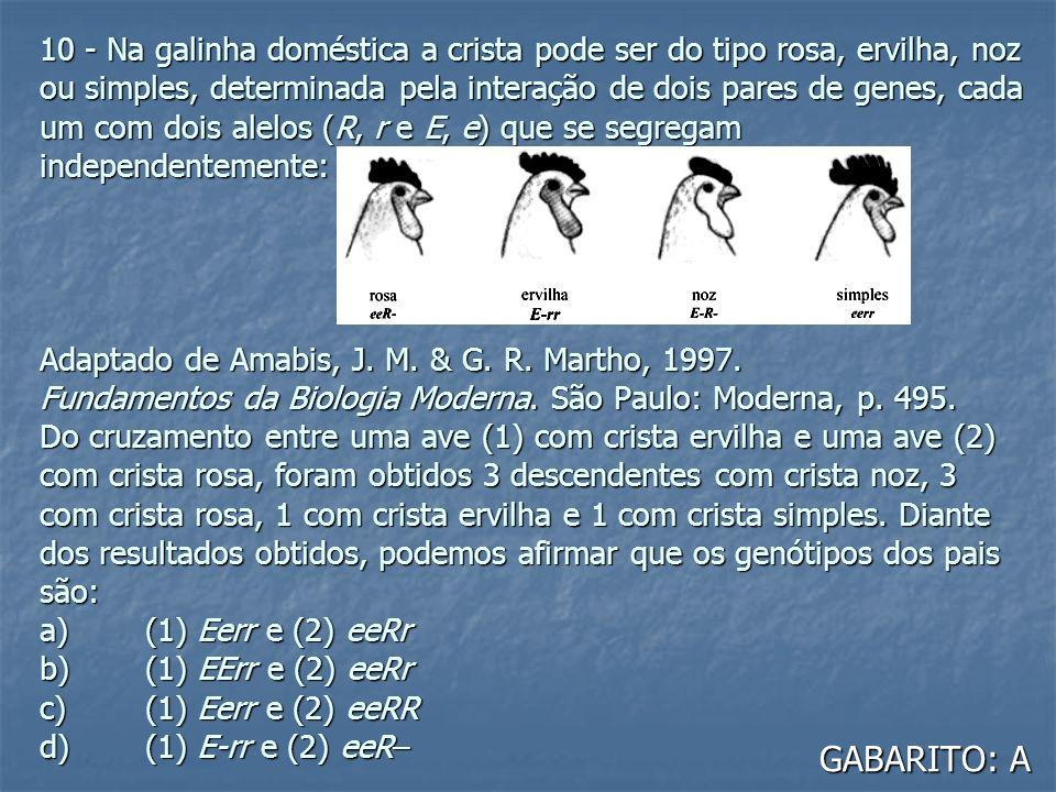 10 - Na galinha doméstica a crista pode ser do tipo rosa, ervilha, noz ou simples, determinada pela interação de dois pares de genes, cada um com dois alelos (R, r e E, e) que se segregam independentemente: Adaptado de Amabis, J. M. & G. R. Martho, 1997. Fundamentos da Biologia Moderna. São Paulo: Moderna, p. 495. Do cruzamento entre uma ave (1) com crista ervilha e uma ave (2) com crista rosa, foram obtidos 3 descendentes com crista noz, 3 com crista rosa, 1 com crista ervilha e 1 com crista simples. Diante dos resultados obtidos, podemos afirmar que os genótipos dos pais são: a) (1) Eerr e (2) eeRr b) (1) EErr e (2) eeRr c) (1) Eerr e (2) eeRR d) (1) E-rr e (2) eeR–