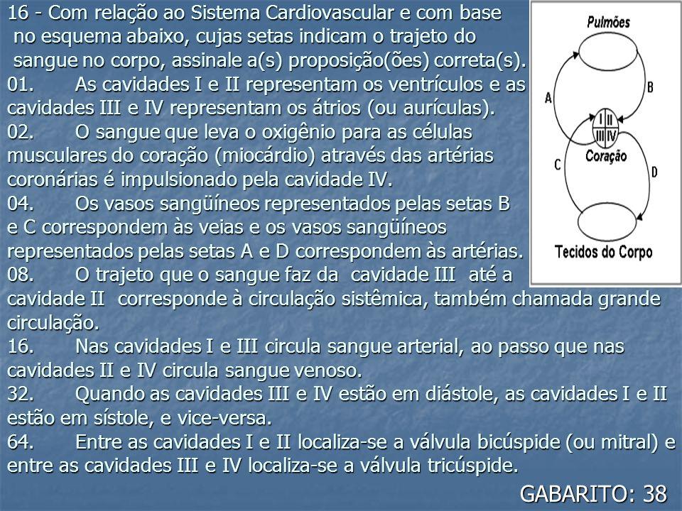 16 - Com relação ao Sistema Cardiovascular e com base no esquema abaixo, cujas setas indicam o trajeto do sangue no corpo, assinale a(s) proposição(ões) correta(s). 01. As cavidades I e II representam os ventrículos e as cavidades III e IV representam os átrios (ou aurículas). 02. O sangue que leva o oxigênio para as células musculares do coração (miocárdio) através das artérias coronárias é impulsionado pela cavidade IV. 04. Os vasos sangüíneos representados pelas setas B e C correspondem às veias e os vasos sangüíneos representados pelas setas A e D correspondem às artérias. 08. O trajeto que o sangue faz da cavidade III até a cavidade II corresponde à circulação sistêmica, também chamada grande circulação. 16. Nas cavidades I e III circula sangue arterial, ao passo que nas cavidades II e IV circula sangue venoso. 32. Quando as cavidades III e IV estão em diástole, as cavidades I e II estão em sístole, e vice-versa. 64. Entre as cavidades I e II localiza-se a válvula bicúspide (ou mitral) e entre as cavidades III e IV localiza-se a válvula tricúspide.