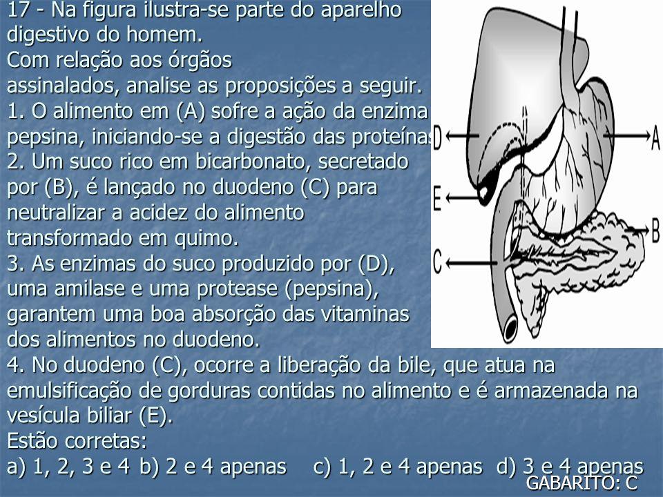 17 - Na figura ilustra-se parte do aparelho digestivo do homem