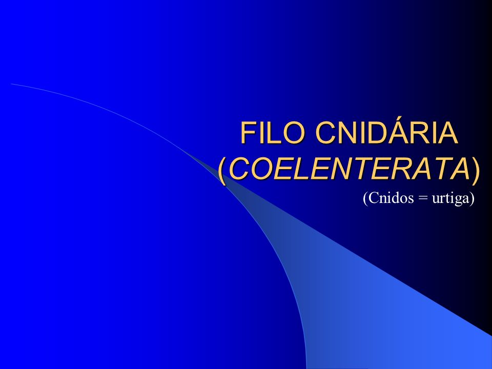 FILO CNIDÁRIA (COELENTERATA)
