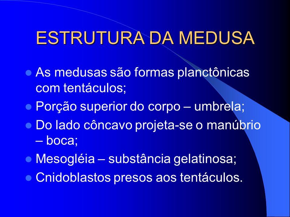 ESTRUTURA DA MEDUSA As medusas são formas planctônicas com tentáculos;