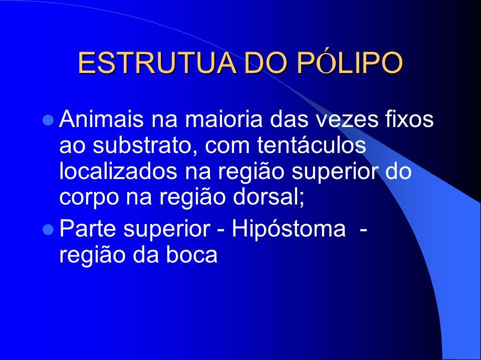 ESTRUTUA DO PÓLIPOAnimais na maioria das vezes fixos ao substrato, com tentáculos localizados na região superior do corpo na região dorsal;