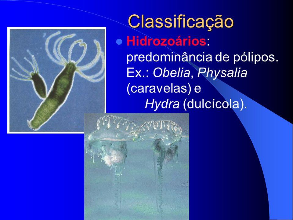 Classificação Hidrozoários: predominância de pólipos.