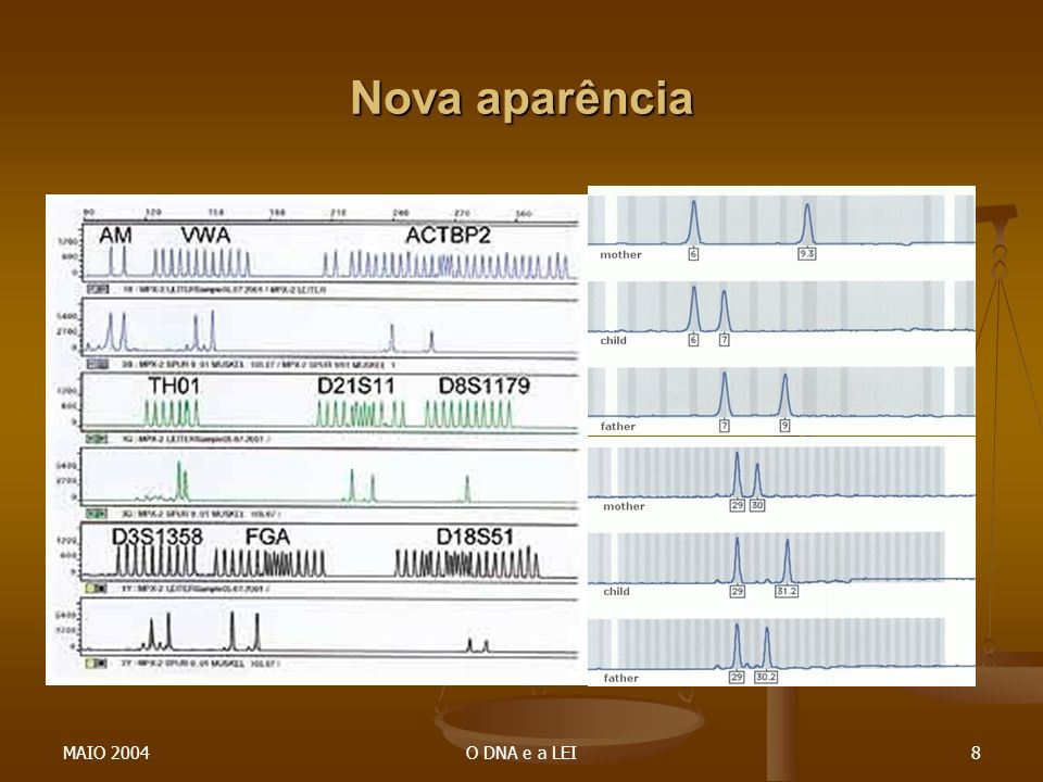 Nova aparência MAIO 2004 O DNA e a LEI