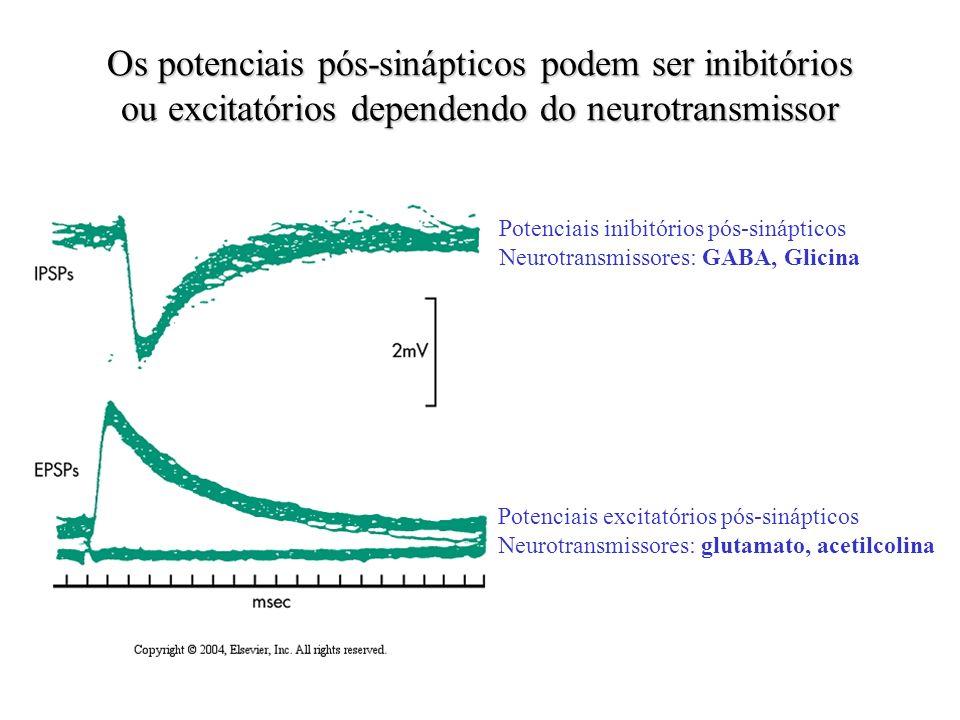 Os potenciais pós-sinápticos podem ser inibitórios ou excitatórios dependendo do neurotransmissor