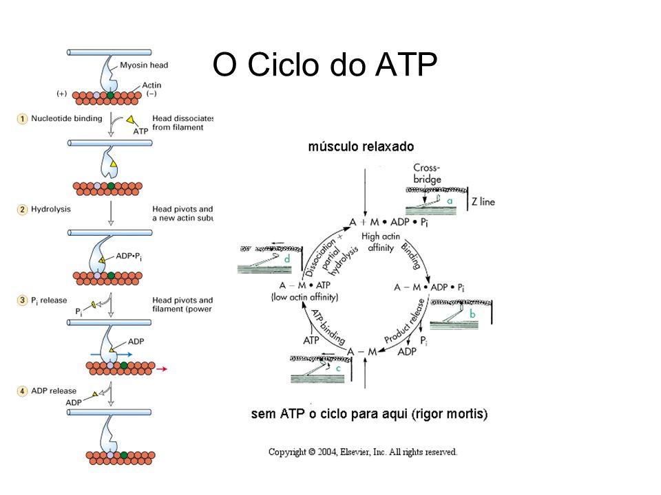 O Ciclo do ATP