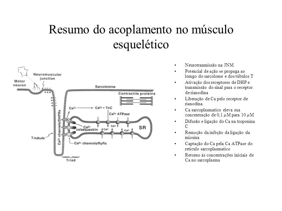 Resumo do acoplamento no músculo esquelético