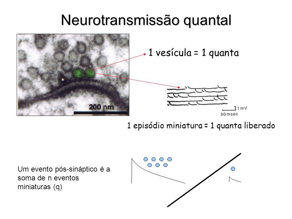 Neurotransmissão quantal