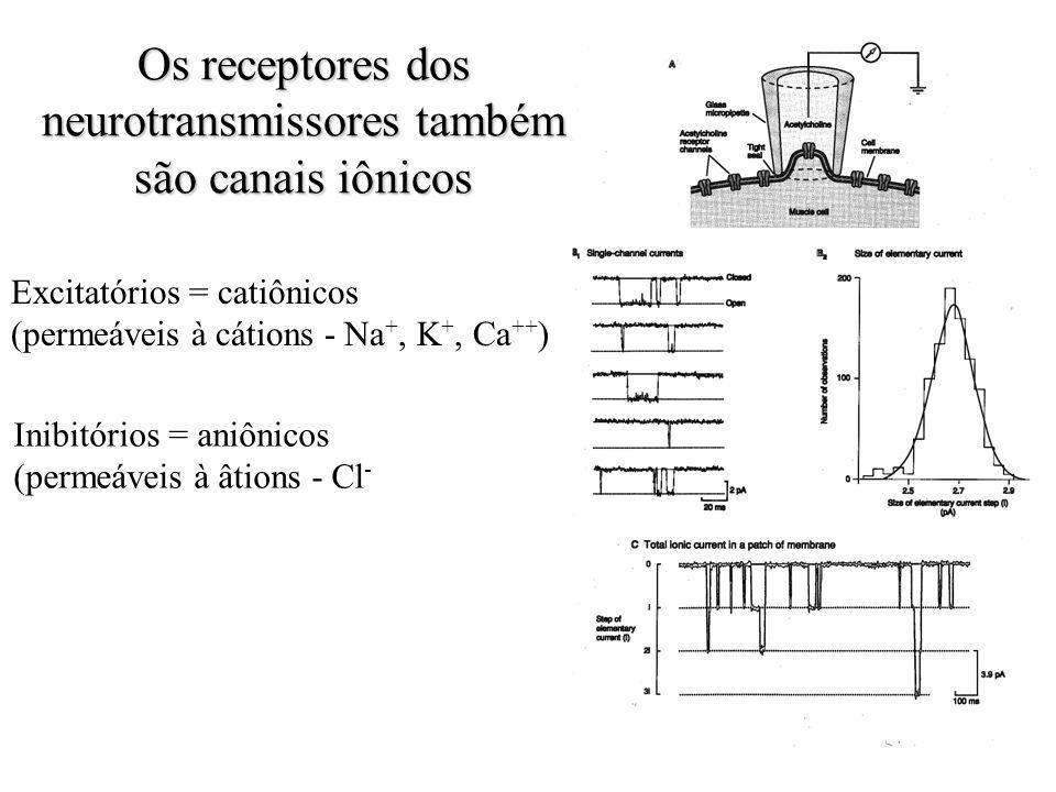 Os receptores dos neurotransmissores também são canais iônicos