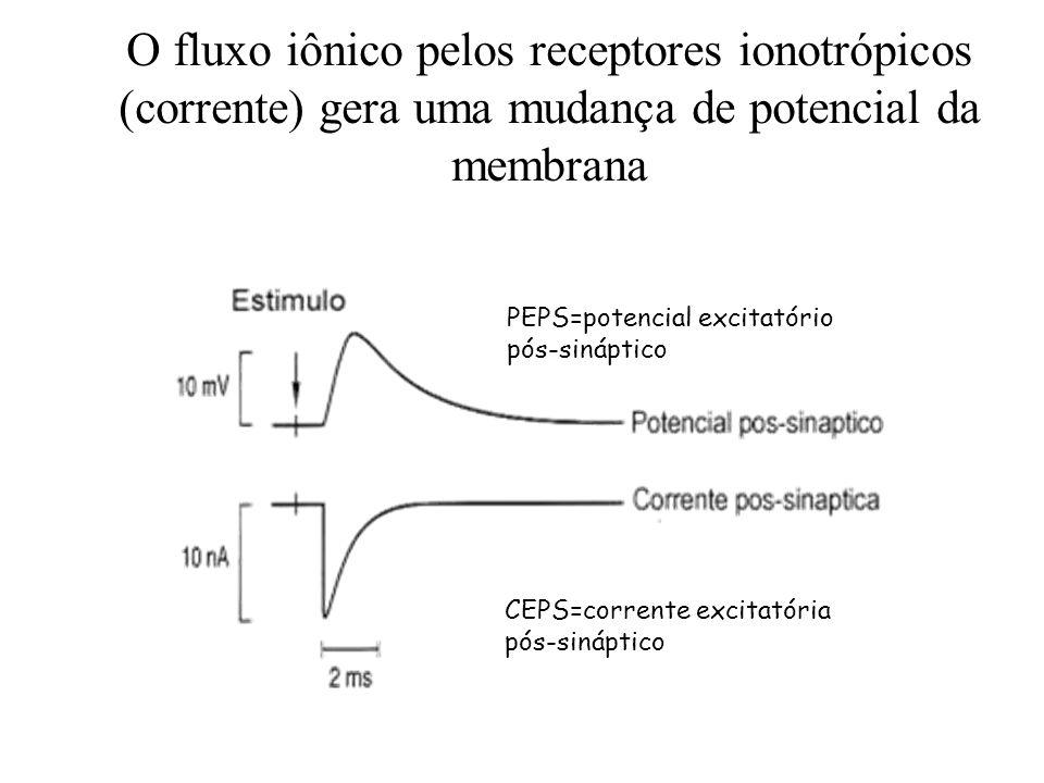 O fluxo iônico pelos receptores ionotrópicos (corrente) gera uma mudança de potencial da membrana