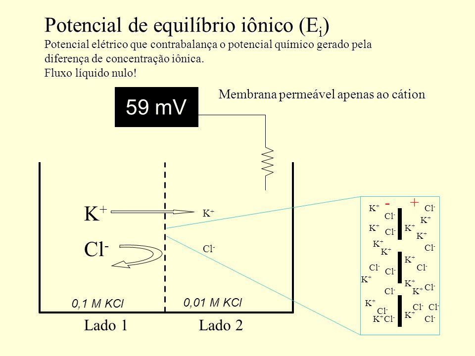 Potencial de equilíbrio iônico (Ei) Potencial elétrico que contrabalança o potencial químico gerado pela diferença de concentração iônica. Fluxo líquido nulo!