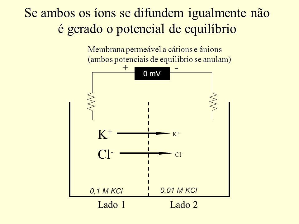 Se ambos os íons se difundem igualmente não é gerado o potencial de equilíbrio
