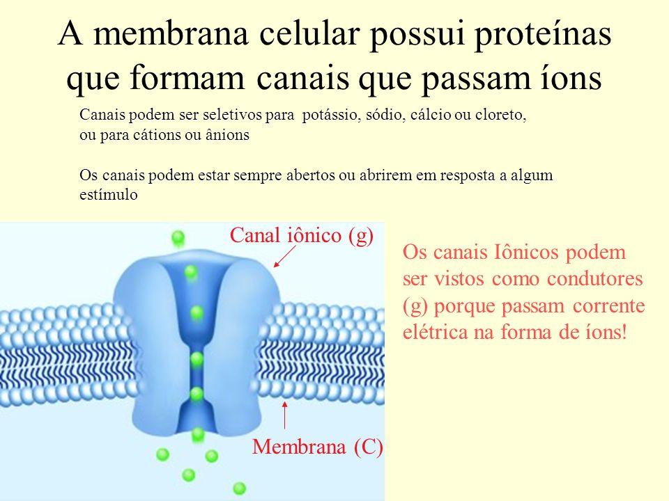 A membrana celular possui proteínas que formam canais que passam íons