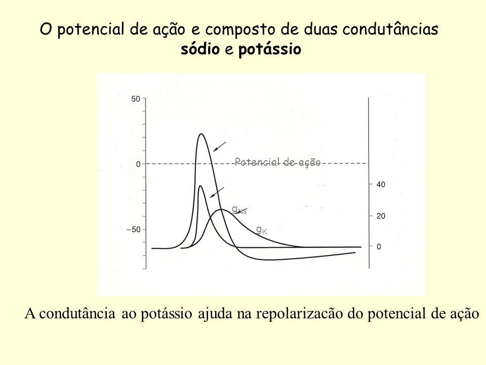 O potencial de ação e composto de duas condutâncias sódio e potássio