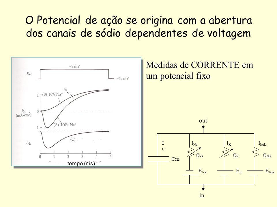 O Potencial de ação se origina com a abertura dos canais de sódio dependentes de voltagem