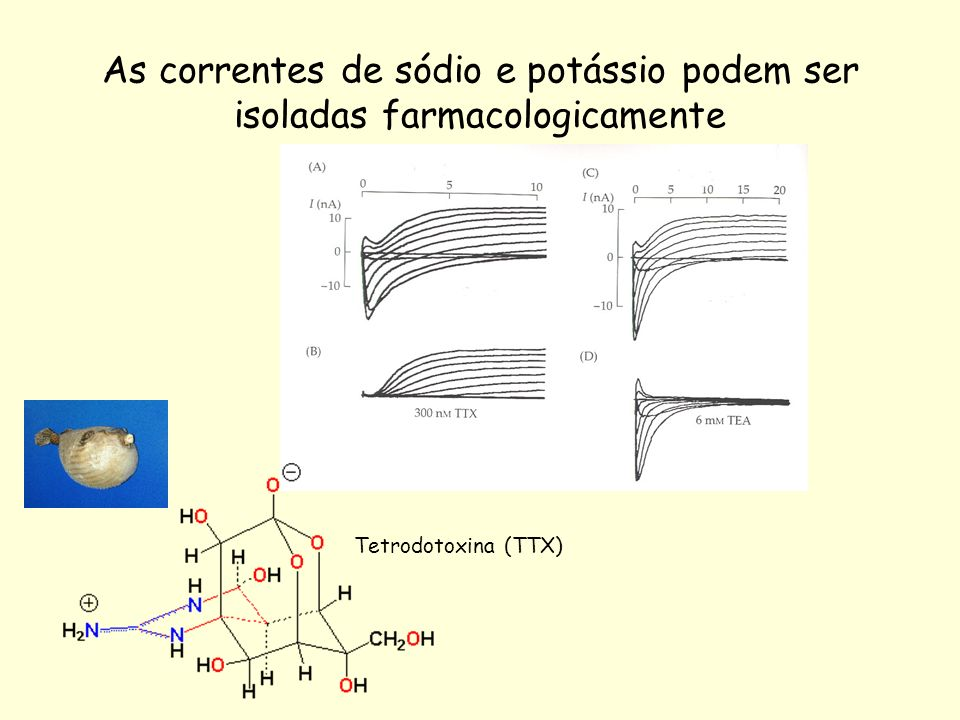 As correntes de sódio e potássio podem ser isoladas farmacologicamente