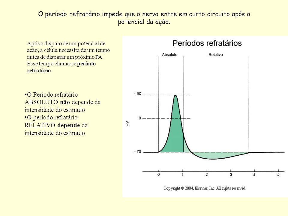 O Período refratário ABSOLUTO não depende da intensidade do estímulo