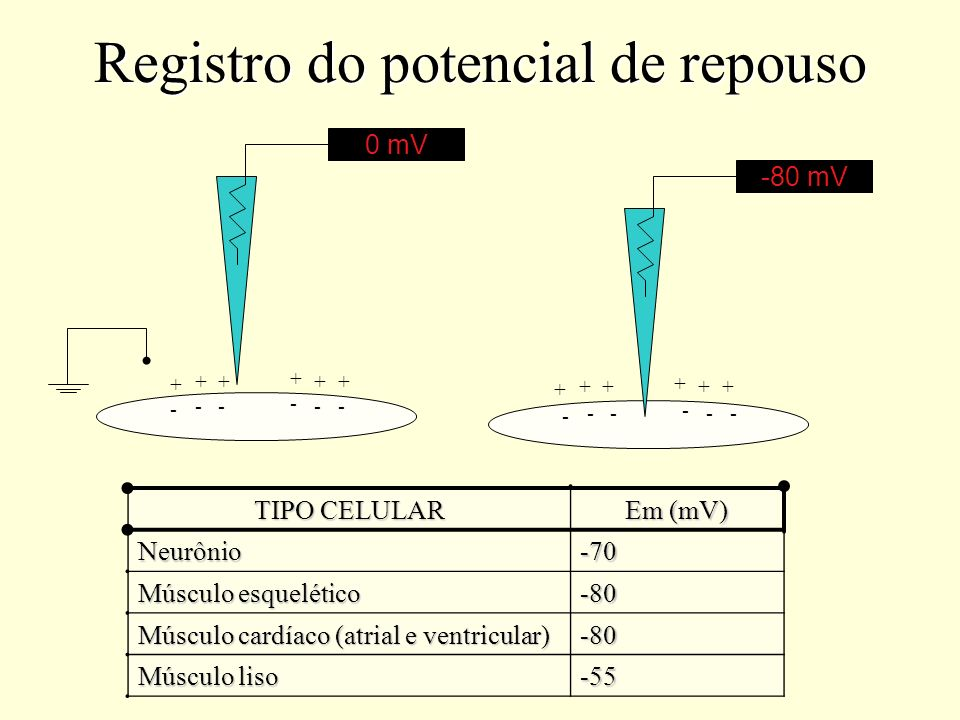 Registro do potencial de repouso
