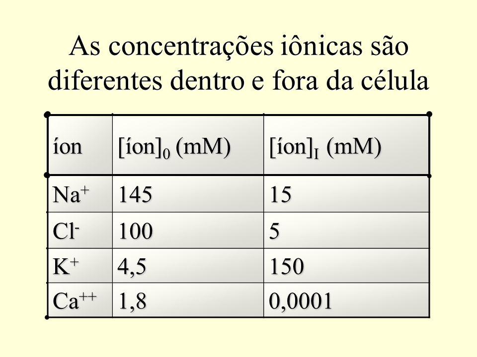 As concentrações iônicas são diferentes dentro e fora da célula