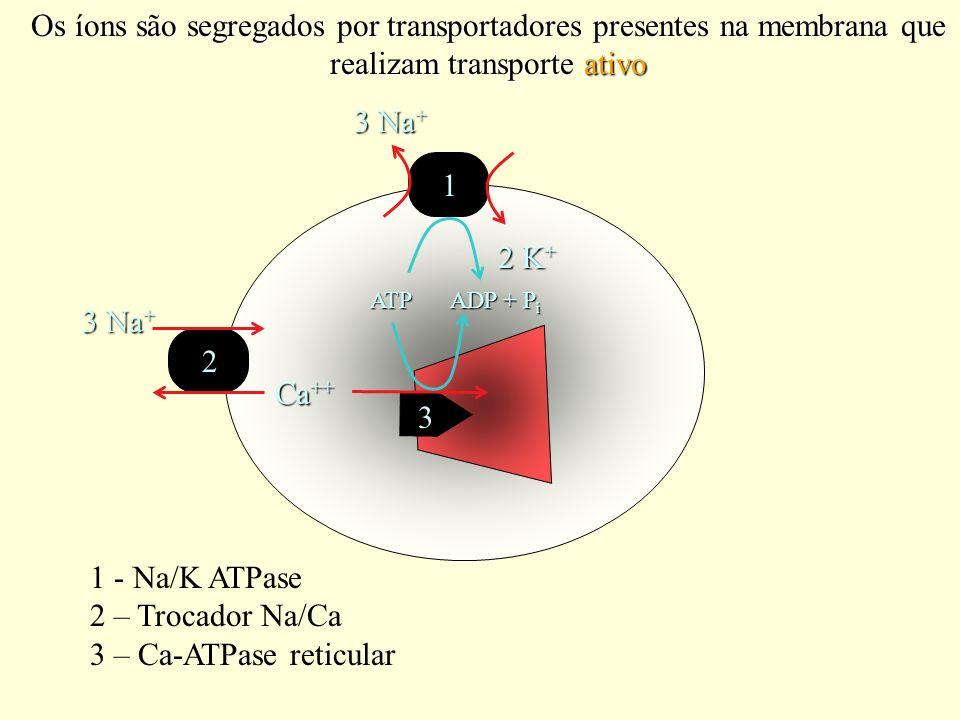 Os íons são segregados por transportadores presentes na membrana que realizam transporte ativo