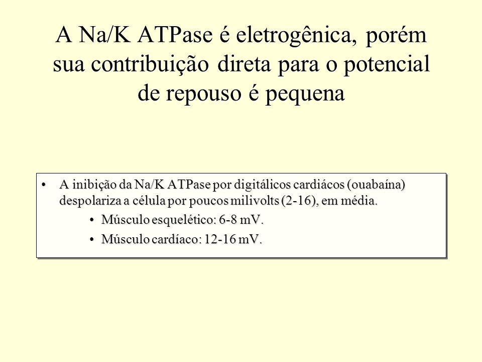 A Na/K ATPase é eletrogênica, porém sua contribuição direta para o potencial de repouso é pequena