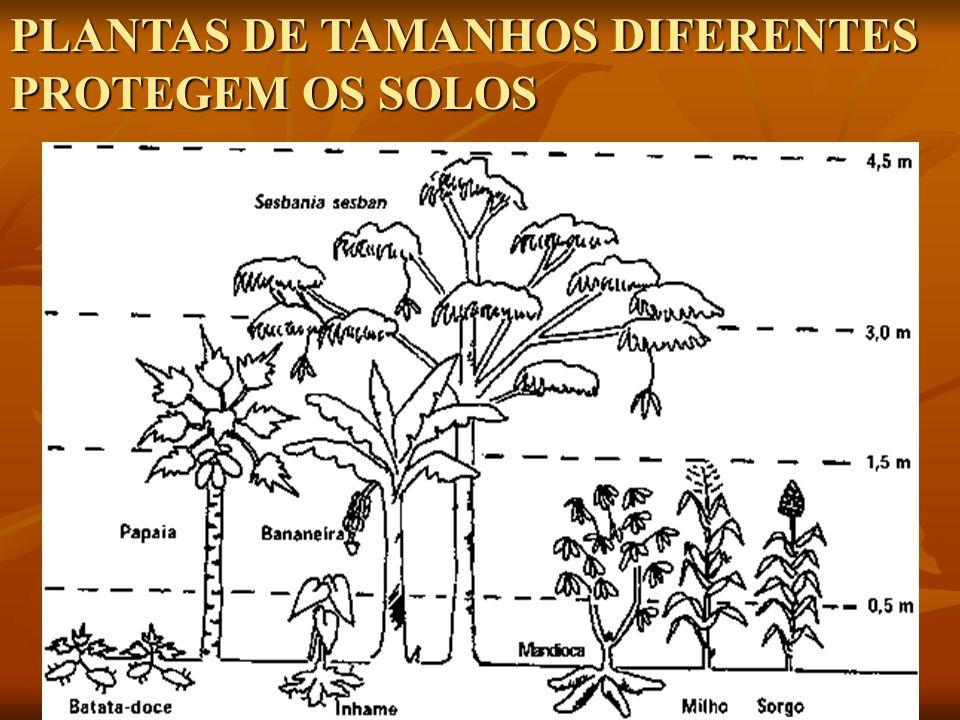 PLANTAS DE TAMANHOS DIFERENTES