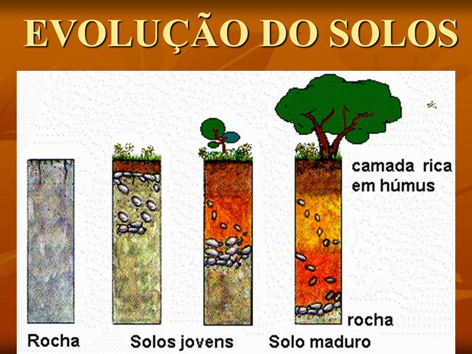 EVOLUÇÃO DO SOLOS