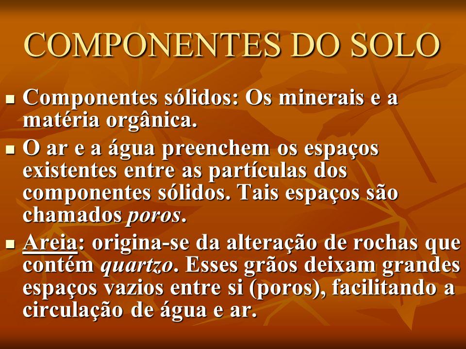 COMPONENTES DO SOLO Componentes sólidos: Os minerais e a matéria orgânica.