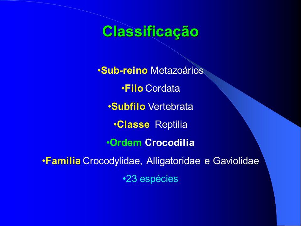 Classificação Sub-reino Metazoários Filo Cordata Subfilo Vertebrata