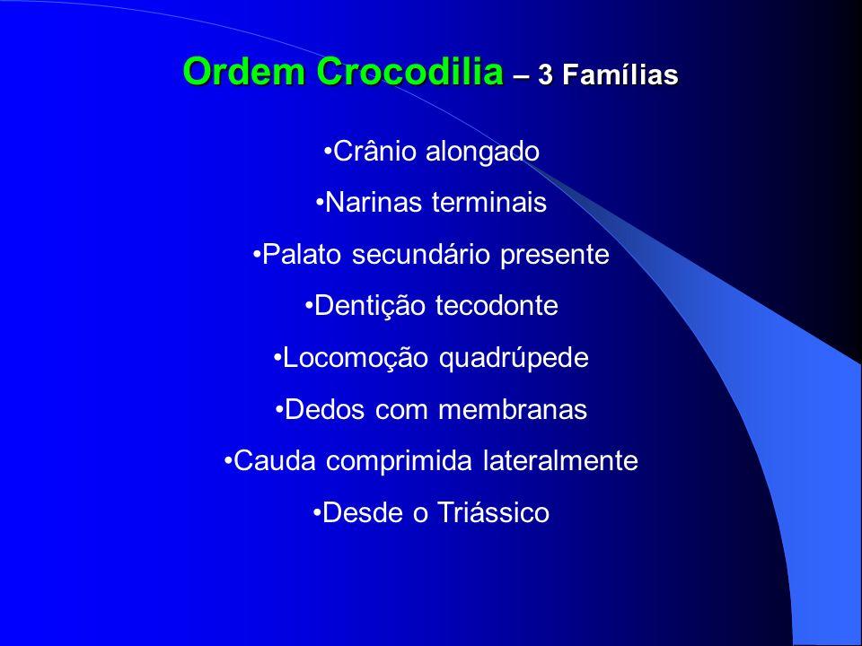 Ordem Crocodilia – 3 Famílias