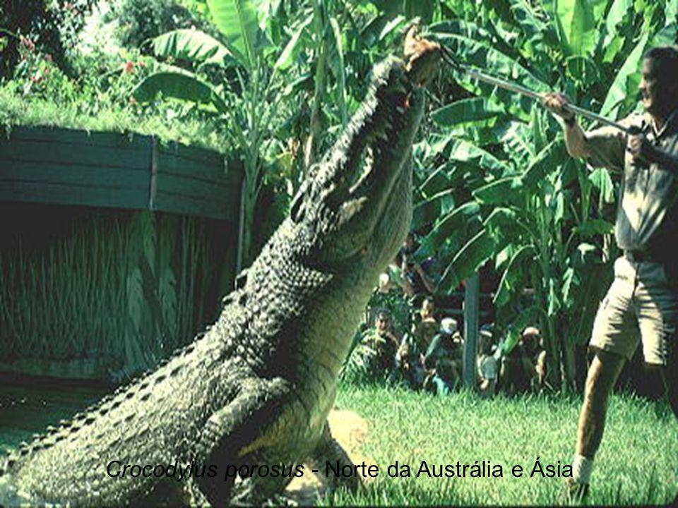 Crocodylus porosus - Norte da Austrália e Ásia