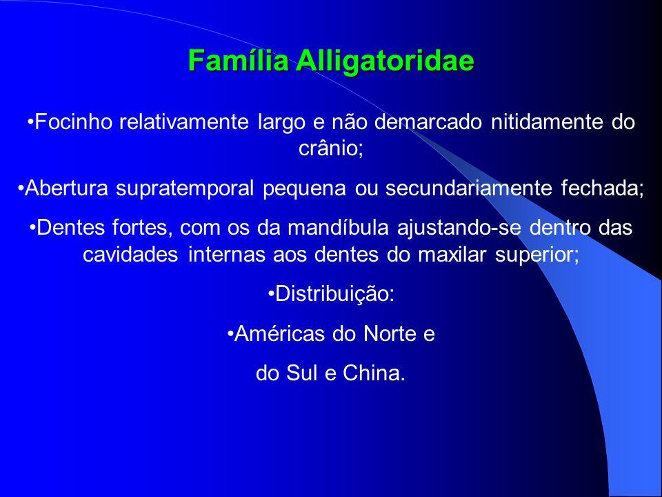 Família Alligatoridae