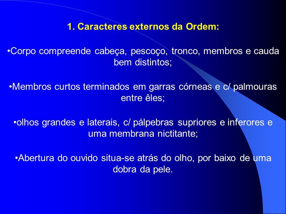 1. Caracteres externos da Ordem: