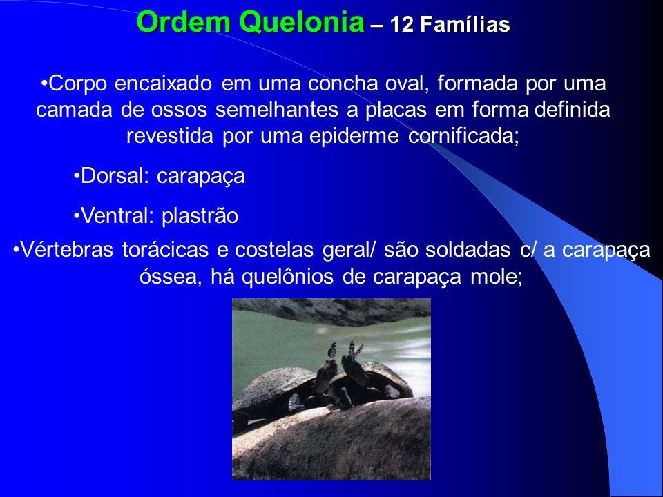 Ordem Quelonia – 12 Famílias