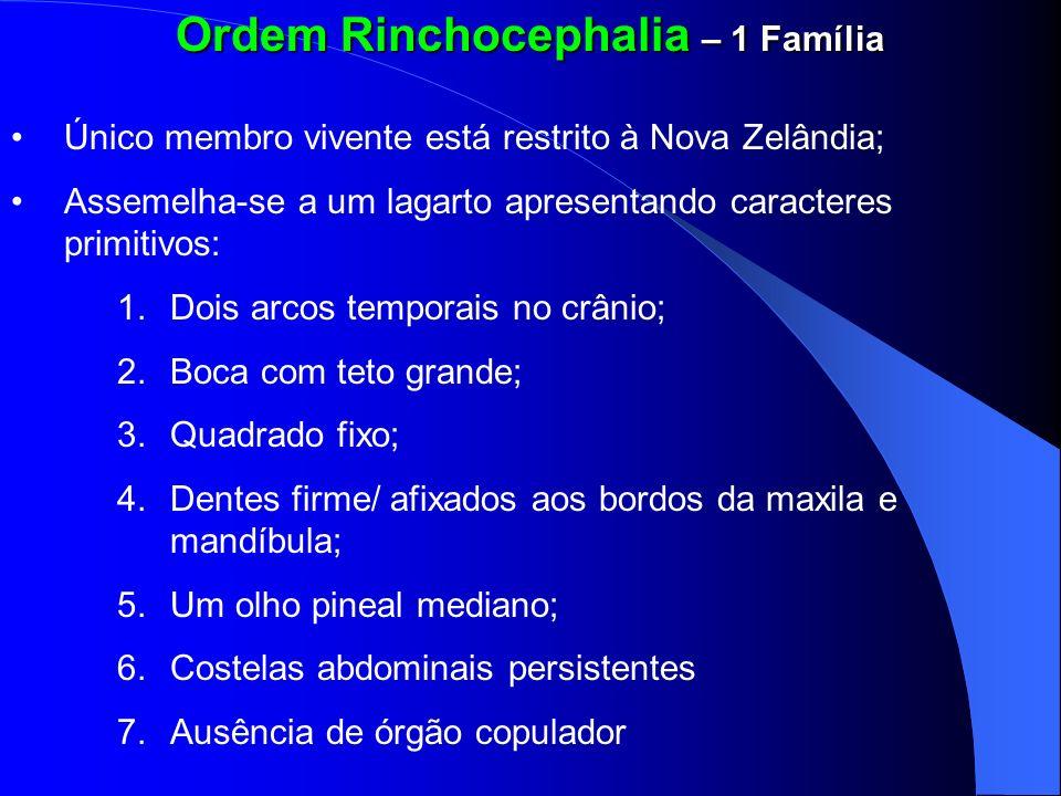 Ordem Rinchocephalia – 1 Família