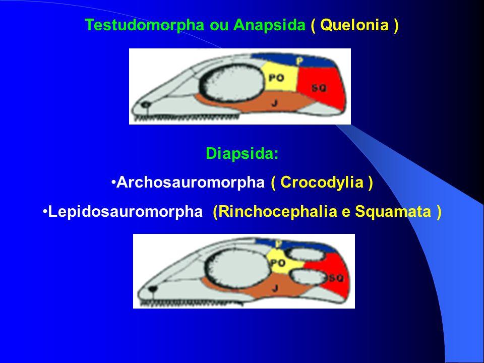 Testudomorpha ou Anapsida ( Quelonia )
