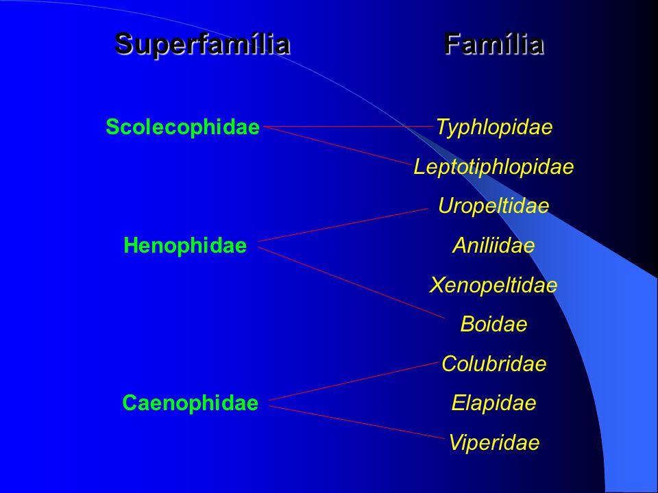 Scolecophidae Typhlopidae