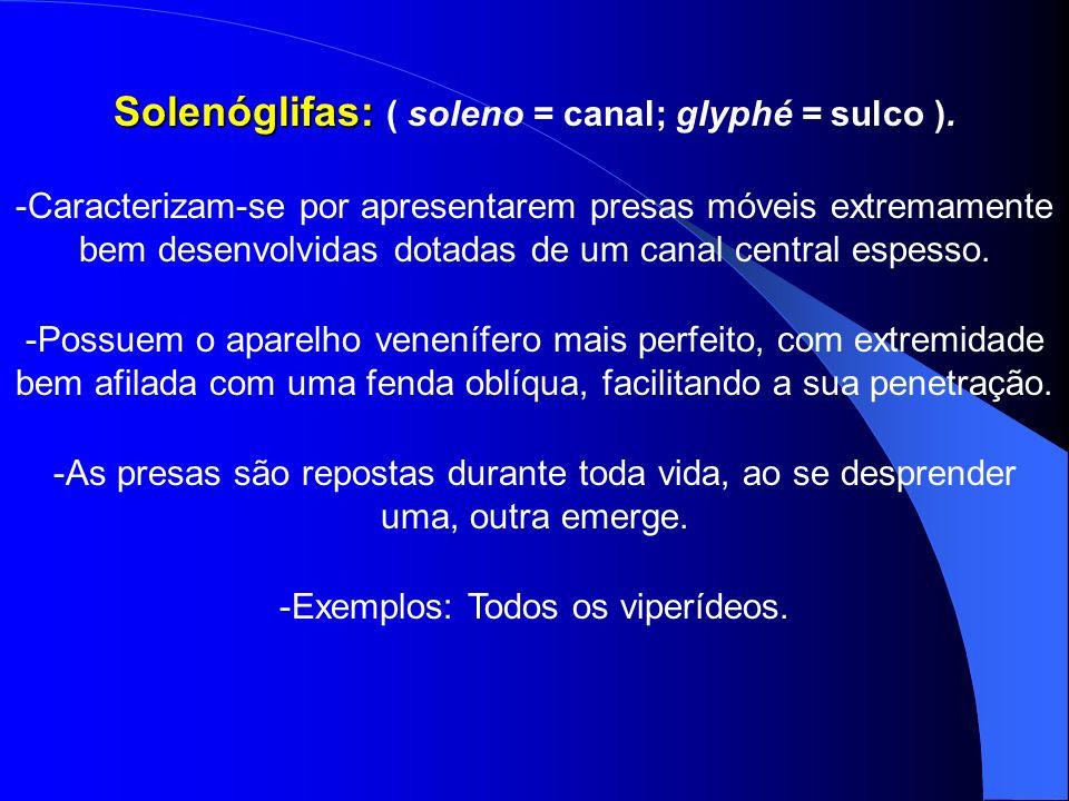 Solenóglifas: ( soleno = canal; glyphé = sulco ).