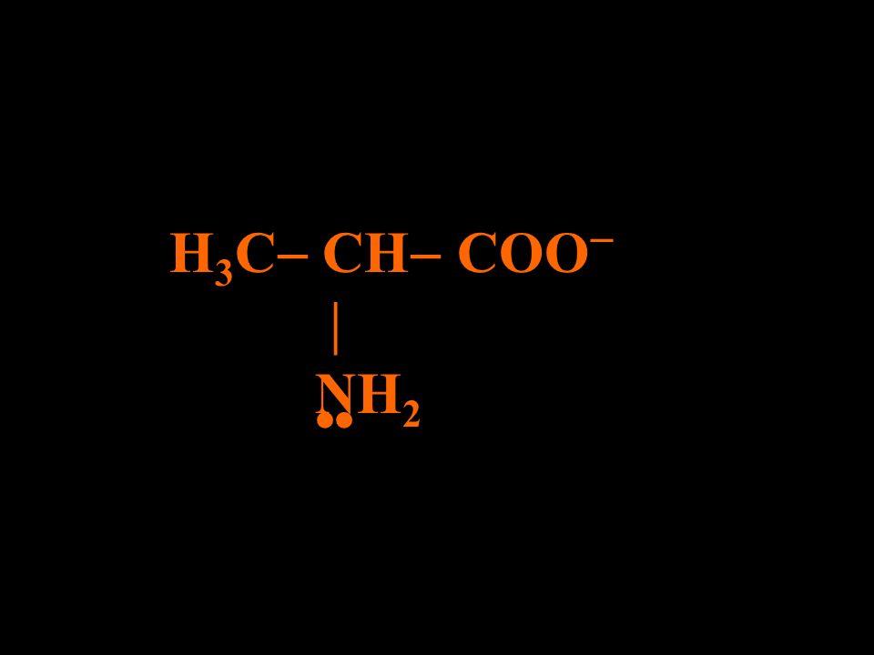 H3C CH COO  NH2 •• H+