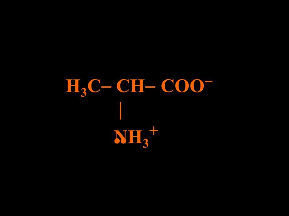 H3C CH COO  NH3+ ••