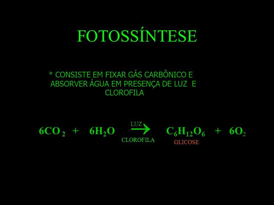 FOTOSSÍNTESE 6CO 2 + 6H2O  C6H12O6 + 6O2