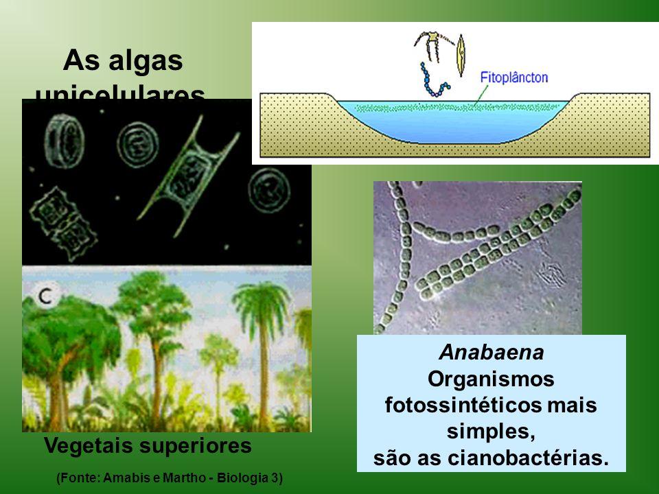 Anabaena Organismos fotossintéticos mais simples,