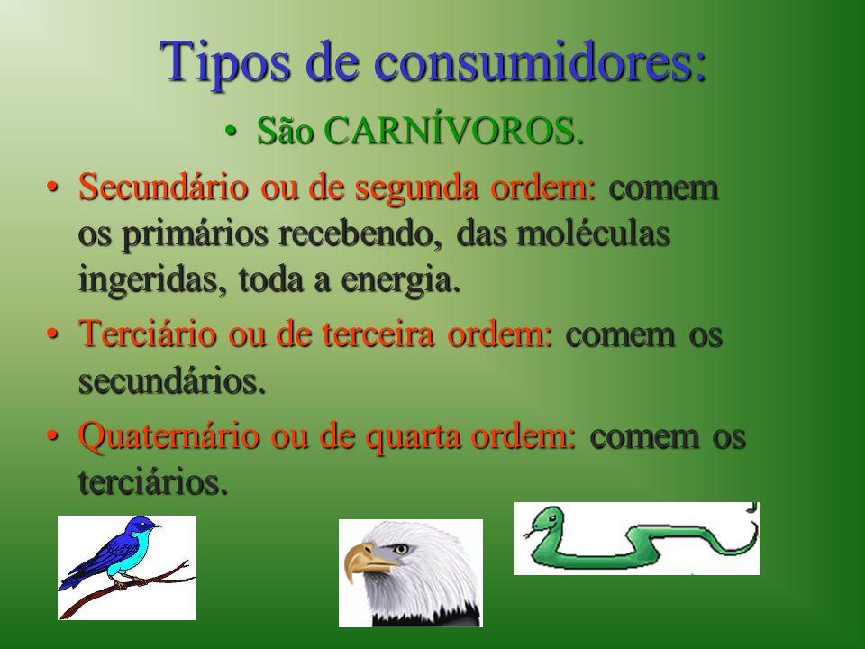 Tipos de consumidores: