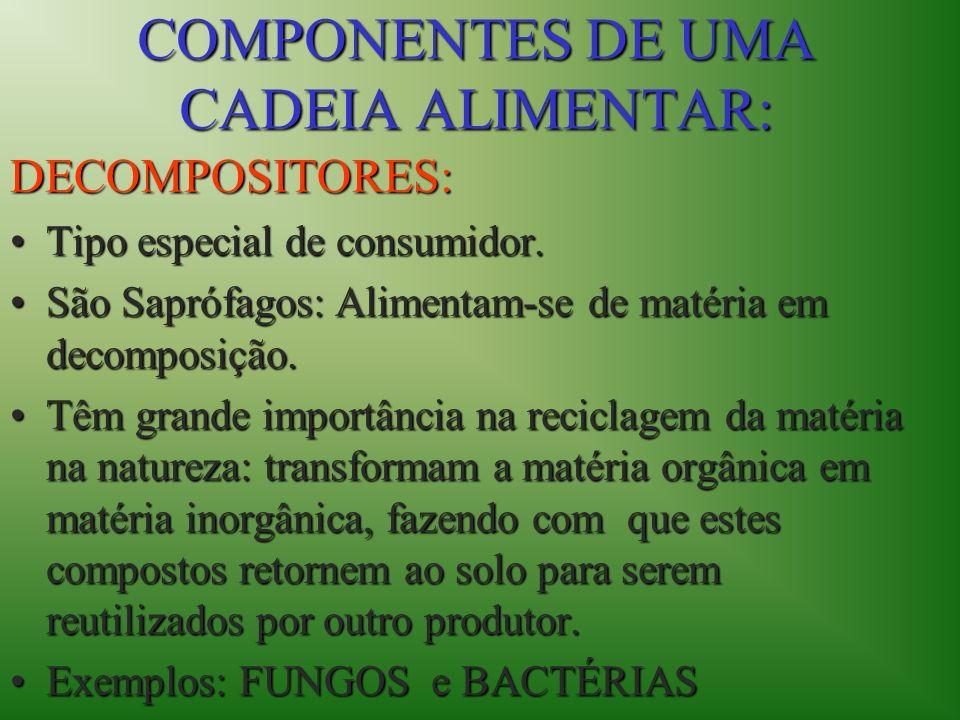 COMPONENTES DE UMA CADEIA ALIMENTAR:
