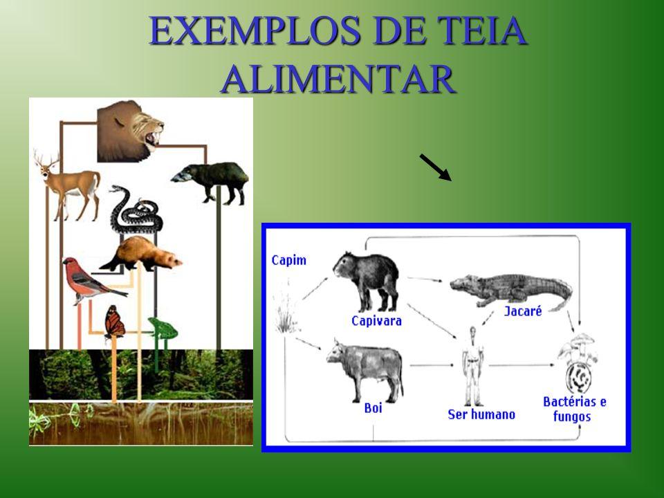 EXEMPLOS DE TEIA ALIMENTAR